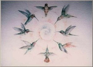 meganne_forbes_A-15_circle_of_hummingbirds2-300x216
